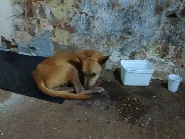 Cachorro estava desidratado e desnutrido quando foi encontrado (Foto: Guarda Municipal/Divulgação)