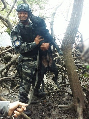 Labrador D-Black ajudou policiais a encontrarem os corpos (Foto: PM/Divulgação)