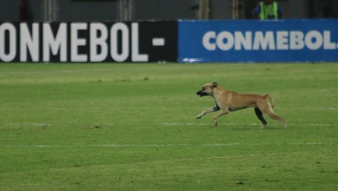 Cachorro campo gramado estreia Grêmio Zamora Libertadores (Foto: Eduardo Moura/GloboEsporte.com)