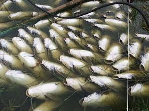 Prejuízo é avaliado em R$ 200 mil, segundo proprietário do pesqueiro (Foto: Arquivo pessoal/Ismael Boiani)
