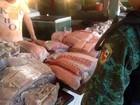 Batalhão apreende mais de meia tonelada de pescado ilegal no AM