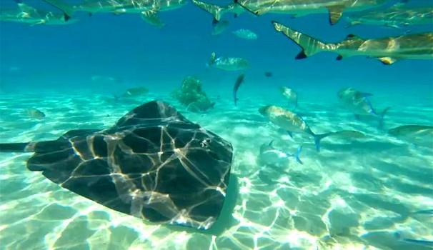 Arraias e tubarões chegam perto dos mergulhadores (Foto: Reprodução/TerradaGente)
