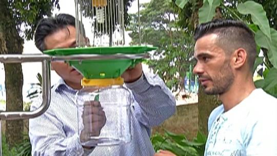 Suzano testa tecnologia chinesa que usa luz para atrair Aedes aegypti