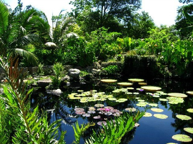 A beleza natural do Fairchild Tropical Garden, em Miami (Foto: Reproduo/ 40 Forever)