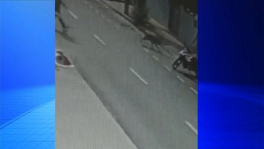 Cão 'funcionário do mês' de posto de combustíveis é ferido com tesoura por morador de rua em Jaú