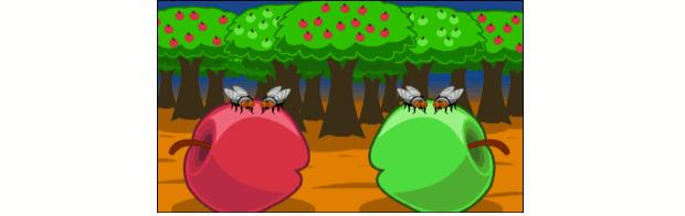 Moscas que vivem no mesmo local, mas se alimentam de frutos diferentes. (Foto: USP)