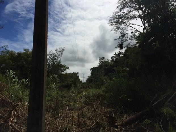 Empresa foi autuada por derrubar árvores, diz prefeitura (Foto: Divulgação/Assessoria)