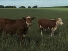 Prazo para regularizar o Cadastro Ambiental Rural está terminando