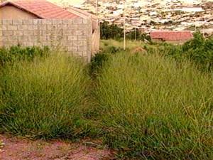 Terreno onde ET de Varginha teria sido visto em reportagem de 1996 (Foto: Arquivo EPTV)