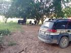 Homem é preso por receptação de gado (Polícia Civil)