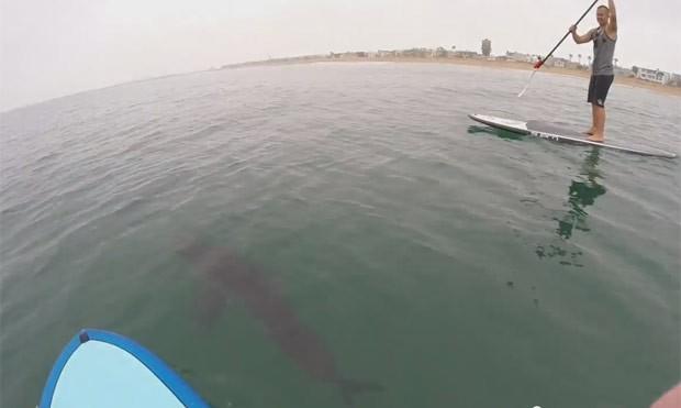 Praticantes de stand up paddle foram surpreendidos por tubarões brancos na Califórnia (Foto: Reprodução/YouTube/Courtney Hemerick)