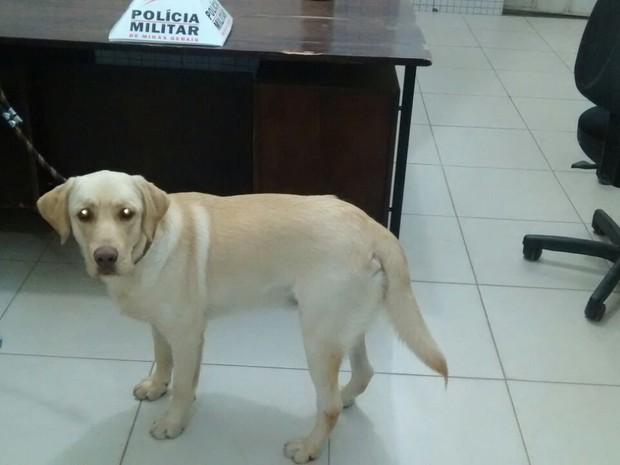 Labrador reconheceu o dono de imediato na delegacia (Foto: Divulgação / PM)