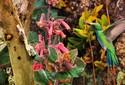 As plantas e aves raras de Pedra Branca, em Minas