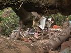 Sobrinha de idosa morta após queda de árvore sagrada se revolta: 'Raiva'