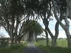 Temporal na Irlanda do Norte derruba  árvores de 'Game of Thrones'