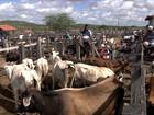 Volta da chuva dá novo fôlego ao comércio de animais na BA