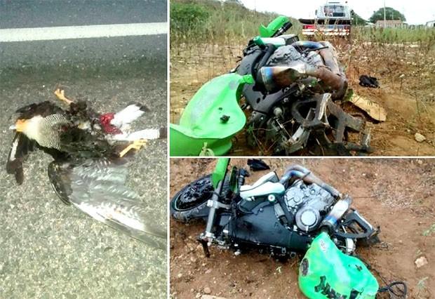 Ao levantar voo, carcará causa acidente e mata motociclista