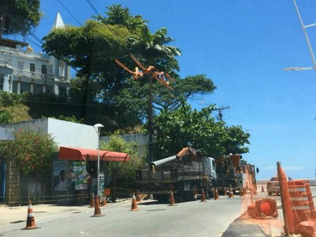 Árvores são podadas no início do Circuito Osmar  (Foto: Henrique Mendes / G1)