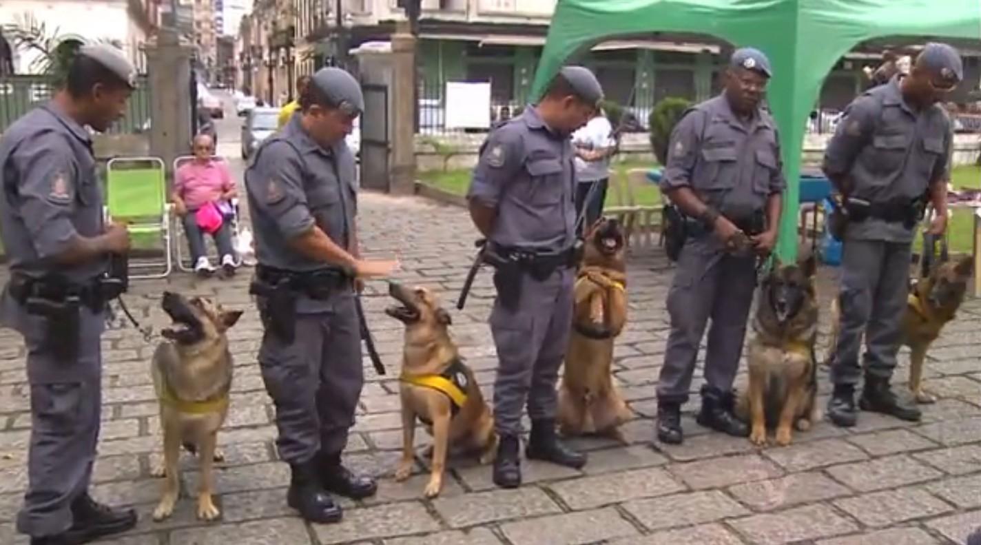 Cães da Polícia Militar (Foto: divulgação)