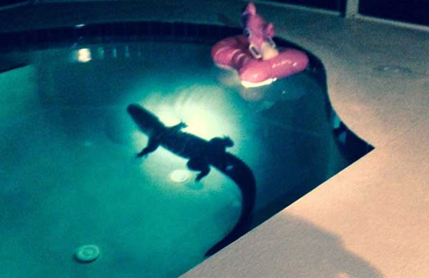 Jacaré de 2,4 m assustou casal ao invadir casa e mergulhar em piscina em Bradenton, na Flórida (EUA) (Foto: Reprodução/YouTube/ABC)