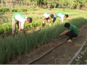 Alunos do curso de ciências agrárias da UEAP em trabalho de campo (Foto: Cassio Albuquerque/G1)