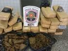 Bepi apreende 28 kg de maconha em casa perto da penitenciária de Caruaru