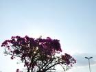 Temperaturas podem chegar a 42°C no norte e Pantanal de MS, diz Inmet
