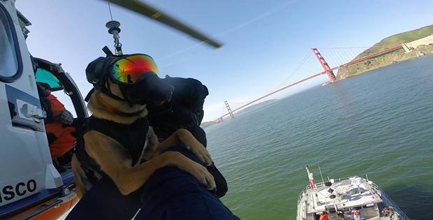 Cães da Guarda Costeira dos EUA usam óculos 'estilosos' em treino (Foto: U.S. Coast Guard Maritime Safety & Security Team/Facebook)