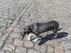 Cachorro sobrevive após oito dias preso em contêiner que ia para a Índia