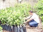 Produtores rurais recebem mudas de árvores frutíferas em Córrego Fundo