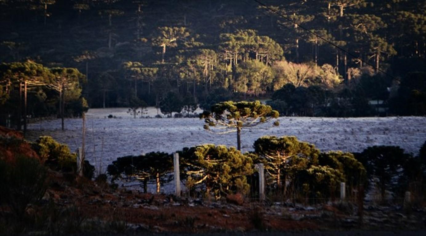 Quinta-feira (28) amanheceu gelada em Santa Catarina (Foto: Mycchel Legnaghi/São Joaquim Online)