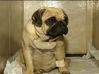 Cadela desaparecida sobrevive 8 dias em buraco, mas não pode mais andar
