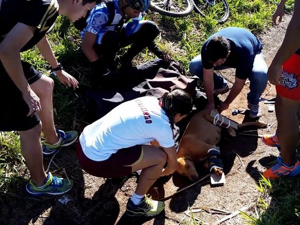Ciclistas contaram com apoio de médico e de uma bombeiro para socorrer cadela (Foto: Chico Escolano/EPTV)