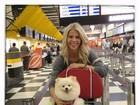 Karina Bacchi viaja com cãozinho: 'Prontos para embarcar'