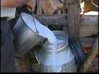 Em MG, preço em baixa e custo em alta desanima produtores de leite