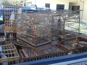 Pássaros silvestres (Foto: Chico Buzzi/RBS TV)