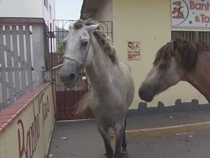 Dois cavalos em frente a uma clínica veterinária em São Vicente (Foto: Reprodução/TV Tribuna)