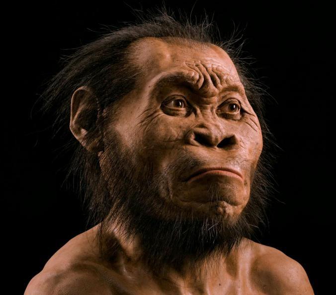 Reconstrução de como teria sido a aparência do Homo naledi (Foto: Reprodução | National Geographic)
