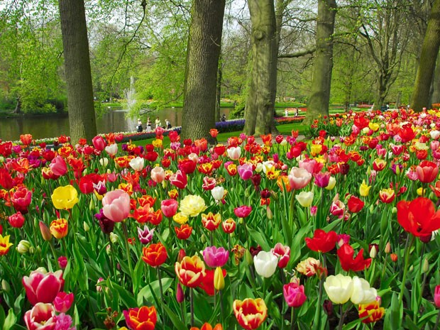 G1 39 parque das tulipas 39 abre temporada de primavera na for Amsterdam casa rosa