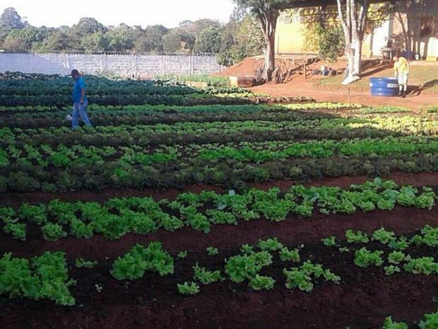 Horta no presídio de semiaberto de Ponta Porã (Foto: Agepen/ Divulgação)