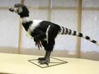 Cientistas apresentam réplica de dinossauro encontrado em MG