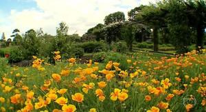 Apicultores criam abelhas no jardim botânico real de Londres (jornal hoje)