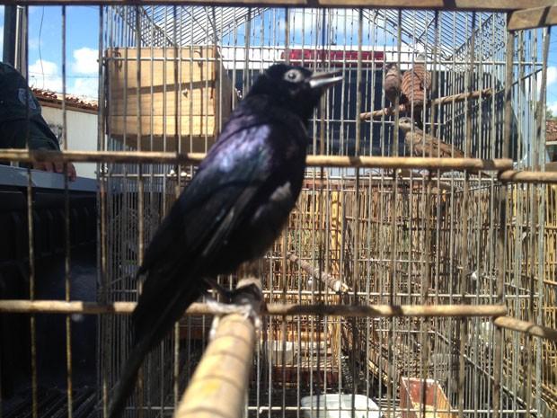 Aves foram apreendidas por Polícia Ambiental na Operação Resgate, em João Pessoa (Foto: Walter Paparazzo/G1)