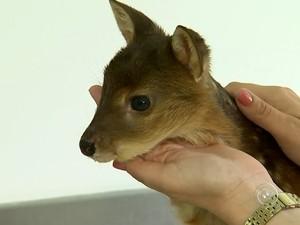Animal foi encontrado em porta-malas de carro (Foto: Reprodução/TV TEM)