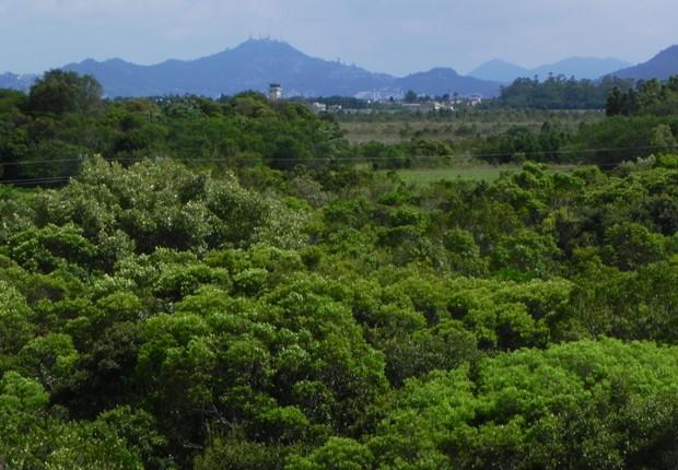 Mata preservada ; meio ambiente ; preservação da natureza ;  (Foto: Embrapa)