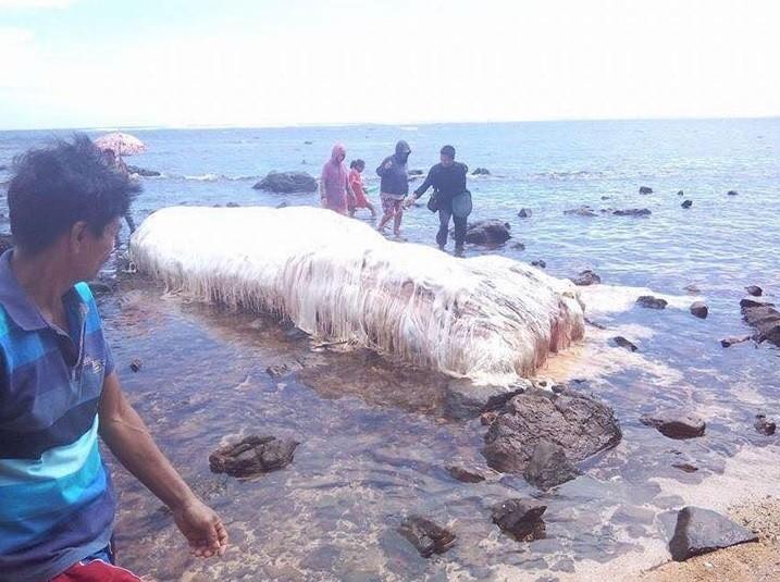 Sim, era uma baleia