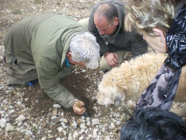 Homens procuram trufas no solo com a ajuda de cão (Foto: Divulgação/Museo de la Trufa)