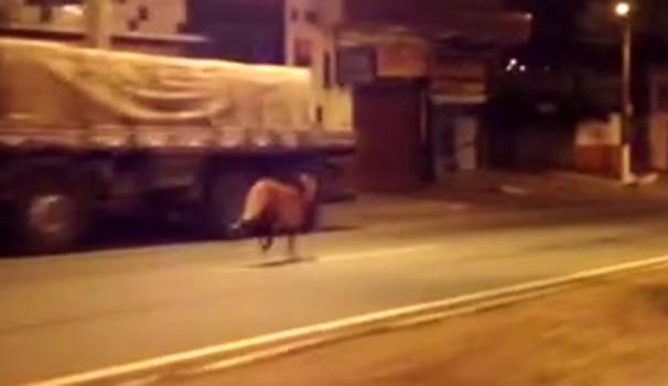 Biólogo orienta contra 'curiosidade' no caso de animais silvestres na cidade (Foto: Reprodução / EPTV)