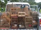 Polícia apreende 58 pássaros em feiras de Maceió e Rio Largo, AL