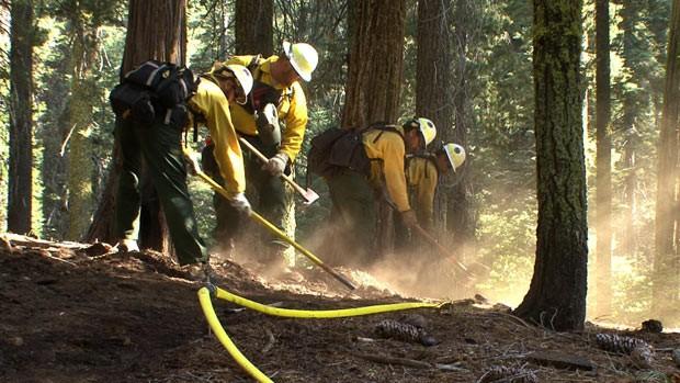 Bombeiros tentam proteger sequoias do Parque Yosemite (Foto: Reuters)